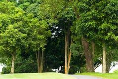 Um bosque das árvores imagens de stock