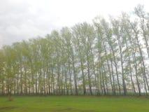 Um bosque puro, envolvido no canto dos pássaros imagens de stock royalty free