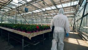 Um botânico anda em uma estufa perto das flores em uns potenciômetros vídeos de arquivo