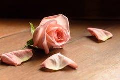 Um botão de um cor-de-rosa aumentou em um de madeira Fotografia de Stock
