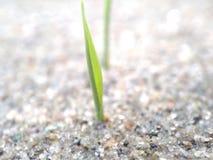 Um botão pequeno que tenta a nascido de uma massa da areia fotografia de stock royalty free