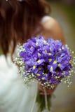 Um bouqet dos açafrões violetas é mantido por uma noiva Fotos de Stock