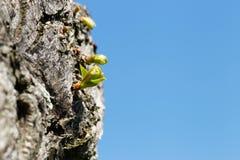Um broto em uma árvore Foto de Stock