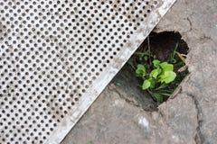 Um broto verde faz sua maneira através de um furo no cartão ou no metal O conceito da proteção ambiental O conceito da vontade fotos de stock royalty free