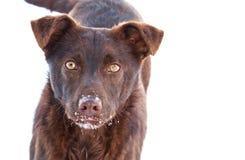 Um cão Fotografia de Stock Royalty Free