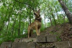 Um cão Fotografia de Stock