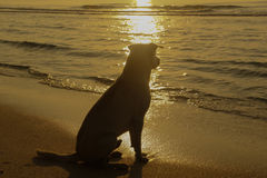 Um cão Fotos de Stock