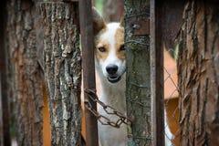 Um cão atrás de uma cerca Imagens de Stock Royalty Free