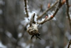 Um cão aumentou no inverno Fotografia de Stock