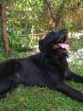 Um cão bonito fotografia de stock