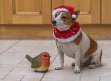 Um cão bonito em um chapéu vermelho de Santa Fotos de Stock Royalty Free