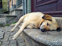 Um cão cansado da rua fotografia de stock royalty free