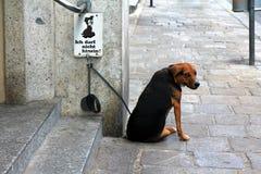 Um cão com o No. persegue o sinal permitido Fotografia de Stock Royalty Free