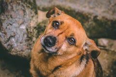 Um cão com um olhar profundo fotografia de stock royalty free