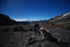 Um cão com picos e montanhas da neve em Peru foto de stock