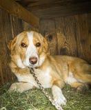 Um cão da casa fotografia de stock royalty free