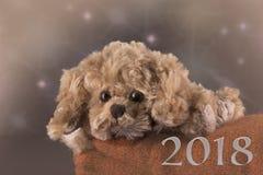 Um cão de brinquedo bonito Imagens de Stock