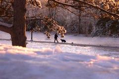 Um cão de passeio do homem no parque do inverno Imagens de Stock