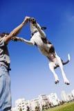 O cão que salta para o alimento Fotografia de Stock