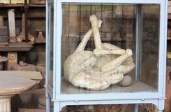 Um cão de Pompeii-Itália Imagem de Stock