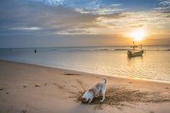 Um cão diging a areia na praia Imagem de Stock