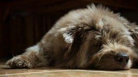 Um cão do sono fotos de stock royalty free