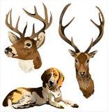 Um cão e uma cabeça dos cervos Fotografia de Stock