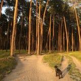 Um cão e uma floresta imagem de stock