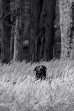Um cão em casa Imagem de Stock Royalty Free