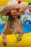 Um cão em um chapéu e em vidros em uma associação inflável brilhante, uma reflexão nos vidros de um Hamburger grande, um conceito Imagem de Stock Royalty Free