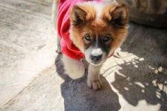Um cão em olhar uma câmera Fotos de Stock Royalty Free
