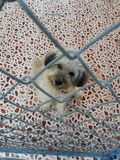 Um cão em um abrigo do animle Imagem de Stock