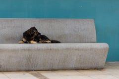 Um cão encontra-se em um banco do cimento, Luquillo, Porto Rico, Estados Unidos da América Fotos de Stock