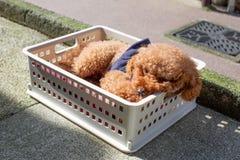 Um cão está descansando no dia de verão imagem de stock royalty free