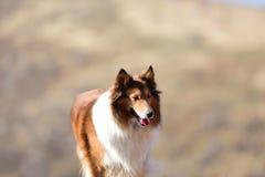 Um cão no dia ensolarado Fotos de Stock