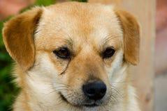Um cão pequeno Imagem de Stock Royalty Free