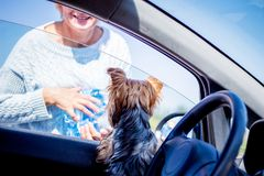 Um cão pequeno em um carro está feliz encontrar sua senhora, que tem o retu foto de stock