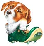 Um cão pequeno em um ponto Imagens de Stock