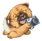 Um cão pequeno que prende uma câmera Fotografia de Stock Royalty Free