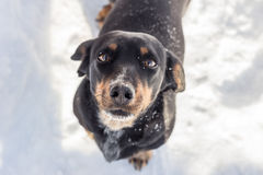 Um cão preto da rua imagem de stock royalty free