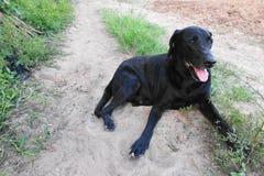 Um cão preto que encontra-se na terra Imagens de Stock