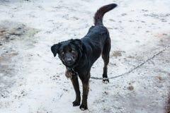 Um cão preto triste em uma corrente imagens de stock royalty free
