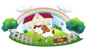 Um cão que guarda uma casa Fotografia de Stock