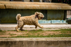 Um cão que salta no parque fotografia de stock