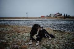 Um cão que senta-se no lado da estrada Foto de Stock Royalty Free