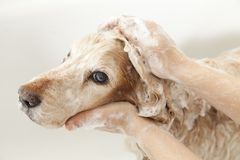 Banheiro a um cão Imagem de Stock