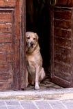 Um cão senta-se fora da porta imagens de stock