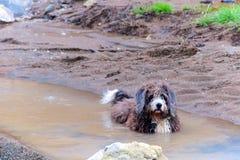 Um cão toma um banho em um springz natural do enxofre Fotos de Stock