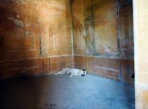 Um cão toma uma sesta em um local do patrimônio mundial do Unesco mas está deteriorando-se, Itália fotos de stock royalty free