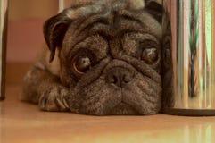 Um cão triste está encontrando-se no assoalho sob a tabela imagens de stock royalty free
